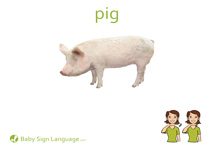 Pig Flash Card Thumbnail