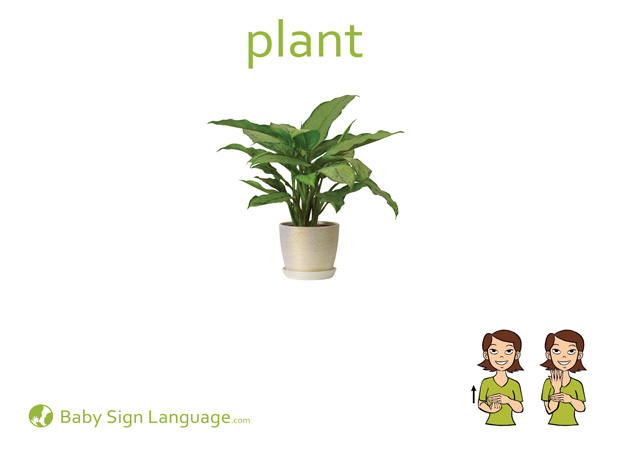 Plant Baby Sign Language Flash card