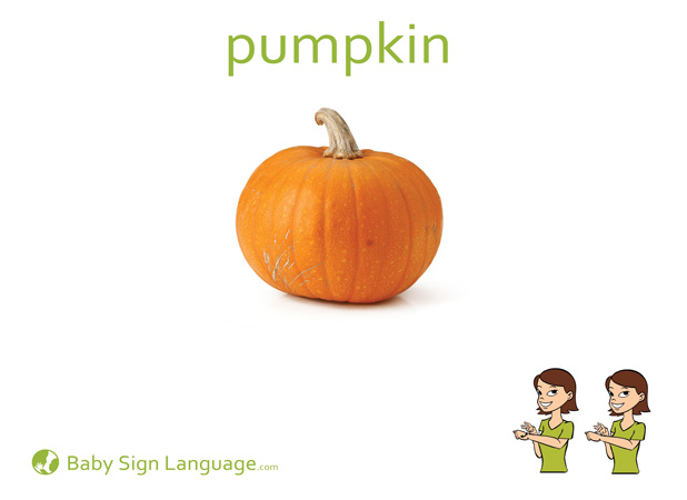 Pumpkin Baby Sign Language Flash card
