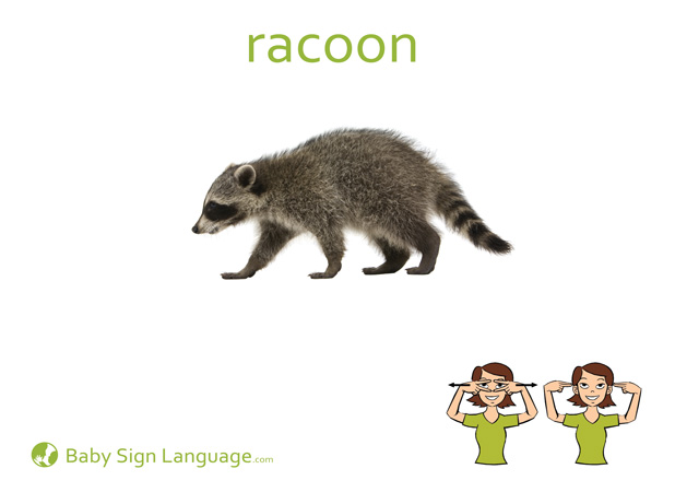 Racoon Baby Sign Language Flash card