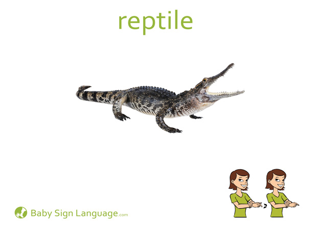 Reptile Baby Sign Language Flash card