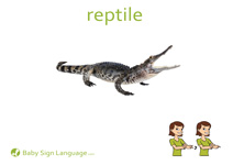 Reptile Flash Card Thumbnail