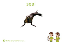 Seal Flash Card Thumbnail