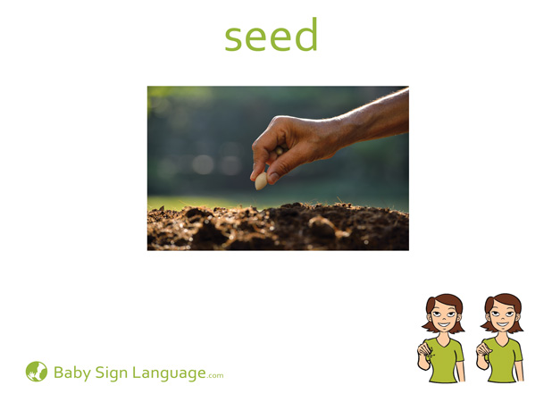 Seed Baby Sign Language Flash card