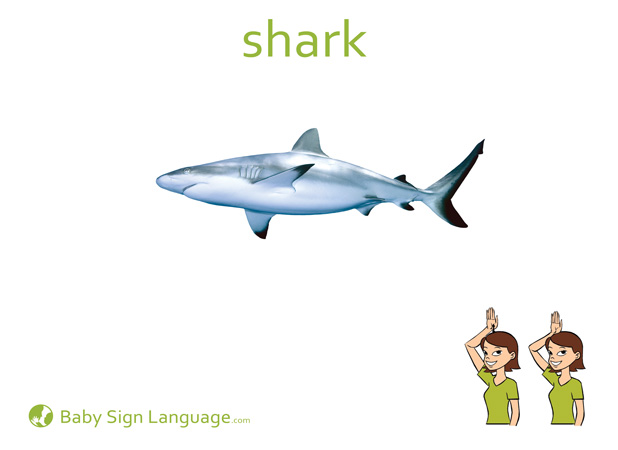 Shark Baby Sign Language Flash card