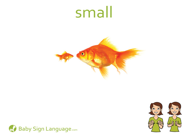 Small Baby Sign Language Flash card