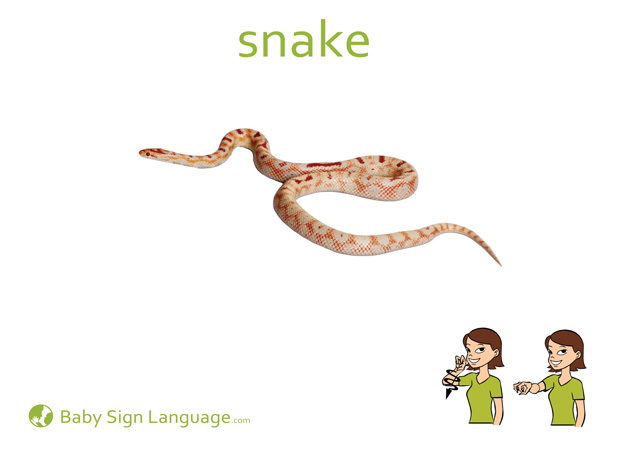 Snake Baby Sign Language Flash card