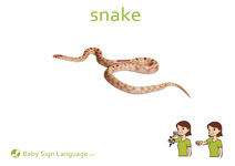 Snake Flash Card Thumbnail
