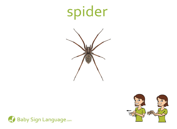 Spider Baby Sign Language Flash card