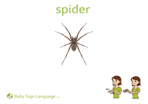 Spider Flash Card Thumbnail