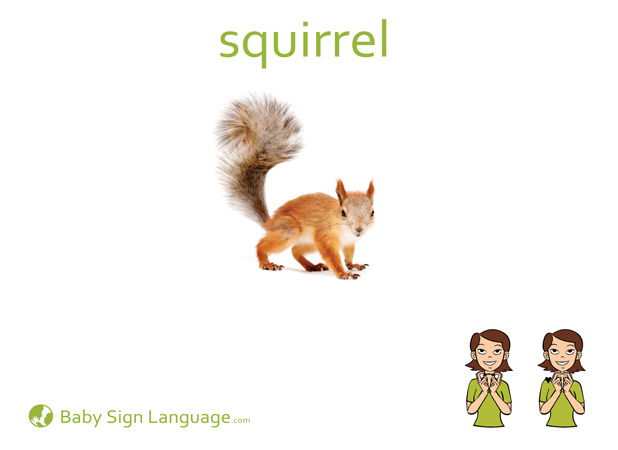 Squirrel Baby Sign Language Flash card