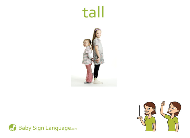 Tall Baby Sign Language Flash card