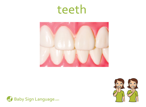 Teeth Baby Sign Language Flash card