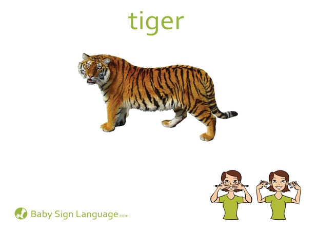Tiger Baby Sign Language Flash card