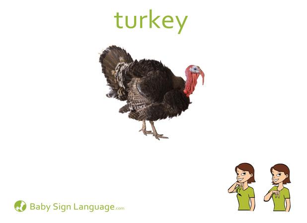 Turkey Flash Card