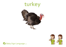 Turkey Flash Card Thumbnail