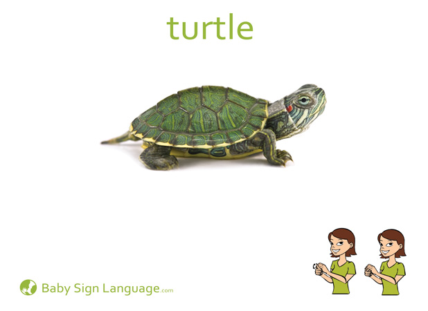 Turtle Baby Sign Language Flash card