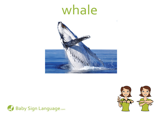 whale Baby Sign Language Flash card