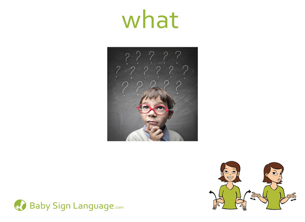 What Baby Sign Language Flash card