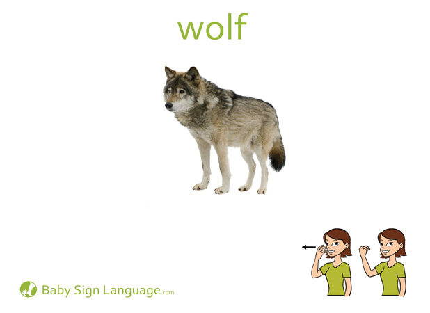 Wolf Baby Sign Language Flash card