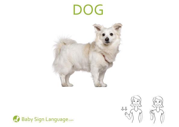 dog Baby Sign Language Flash card