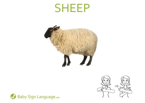 Sheep Baby Sign Language Flash card