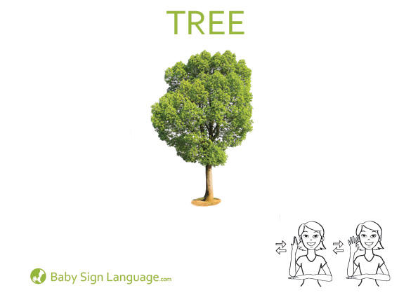 Tree Baby Sign Language Flash card