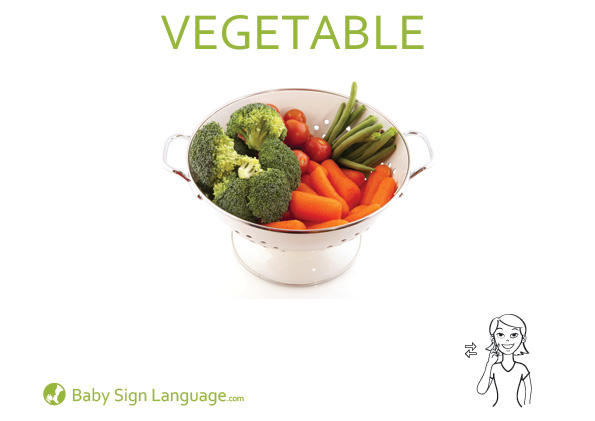 Vegetable Baby Sign Language Flash card