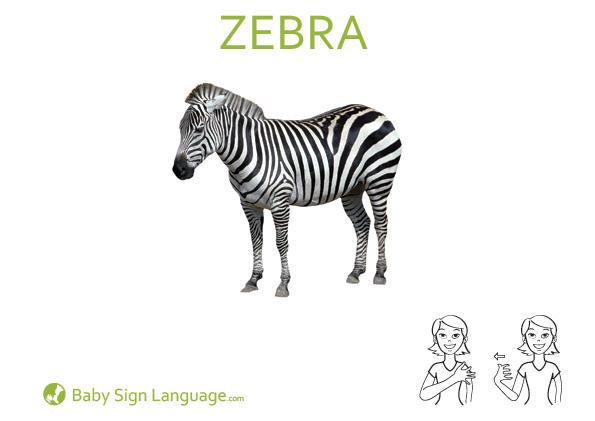 Zebra Baby Sign Language Flash card
